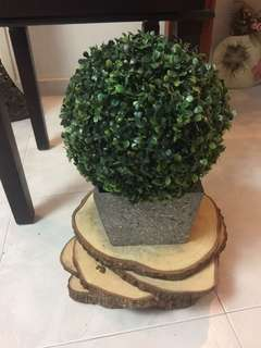 For Rent Artificial Tapiary Ball Plant & Fern with pot