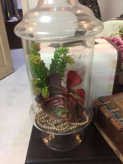 For Rent Apothecary Jar/ Candy Jar