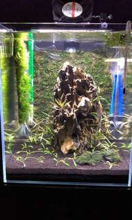 Fish tank clearance