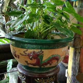 Pot/Pasu naga china antik
