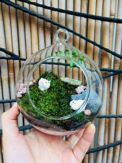 Terrarium: Just me and my moss