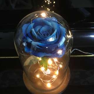 Enchanted Blue Rose