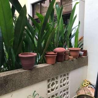 FREE Plastic pots