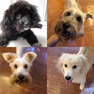 Pet grooming/boarding/sitting