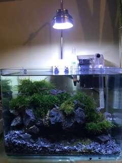 Nano moss planted tank