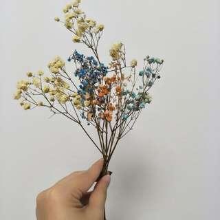 Dried flowers - Mini baby