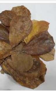 Mini Indian almond leaves