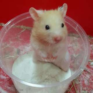To Dear ex- owner of hamster toby
