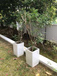 4 x Tall white ceramic planters