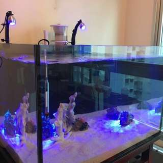 Custom Reef Glass Aquarium All in one Fish marine tank!