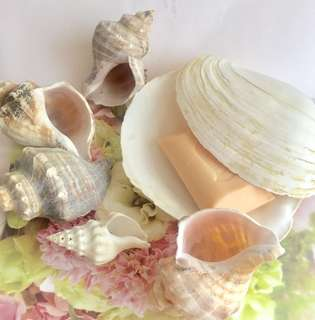 🐚 LOTS OF SHELL DECOR SOAP DISHES