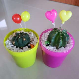 Cactus for birthday gift!