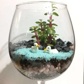 WINEGLASS SUCCULENT #1 (ORDERS AVAILABLE)