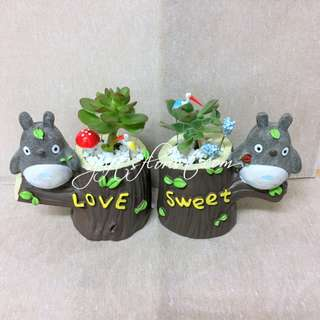 This Month Special: Succulent Plants-Sweet Love Totoro