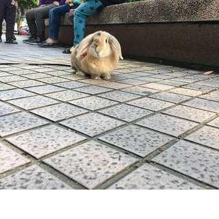 🚚 兔子牽繩