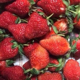 小農草莓🍓