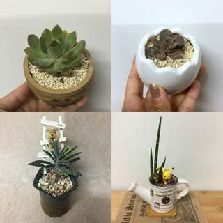This Month Special: Succulent Plants Miniature Garden