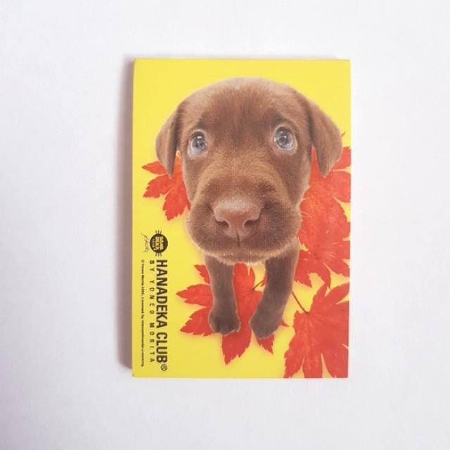 🆕️Small Puppy Memo Pad