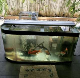 Fish Tank 4 feet