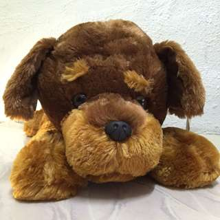 Brown Doggy Bear