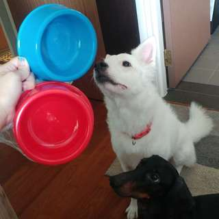 Mini dog bowl