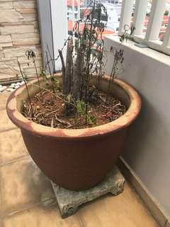 Large Palnt Pot