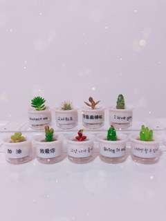 Mini Promise Pot ( Baby Cactus/Succulents)
