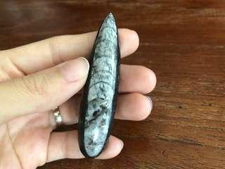 Authentic Orthoceras Gem Specimen Fossil crystal quartz