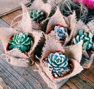 Christening Giveaway Succulents | Cactus Souvenir