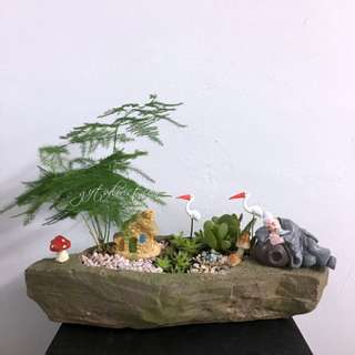 This Month Special:  Asparagus Fern Bonsai