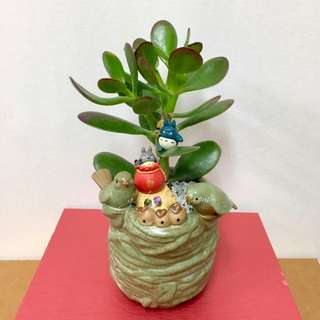 This Month Special: Lucky Plant Jade Plant