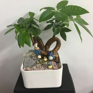 This Month Special: Lucky Plant Money Tree
