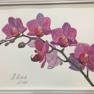 Original watercolor painting Orchids