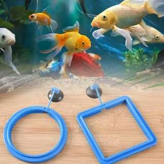 魚缸喂食圈 圓型/藍色