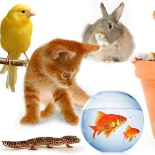 Animal (Small) boarding services