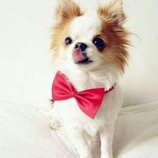 Necktie Cat Collar Neck Accessory Popular Kitten Toy Dog Bow Tie Pet Puppy