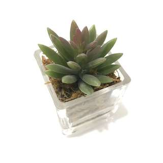 Small glass pot with artificial plant
