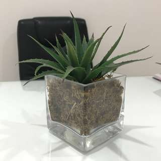 Medium-sized glass pot with articial plant