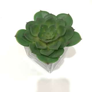 Medium-sized glass pot with artificial plant