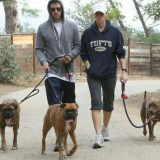 Doggies gathering