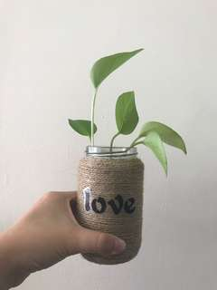 Vase with Plant (Life with Love)