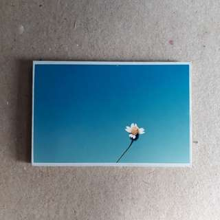 Spring Flower Ref Magnet