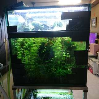 Urgent Flash Sales - Aquatic Plants