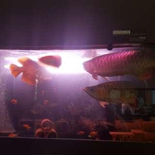 N30 - 6feet fish tank(sump tank)