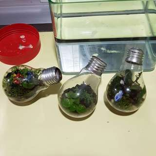 CUTE AND ADORABLE TERRARIUMS FOR SALE