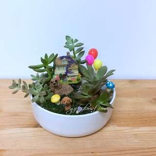 This Month Special:  Miniature Garden Succulent Plants & Puppy Dog