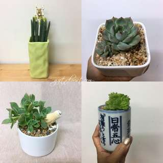 This Month Special: Succulent Plants