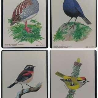 🚚 台灣特有種鳥類明信片