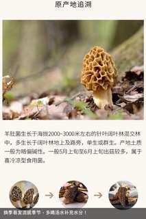 西藏野生 羊肚菌
