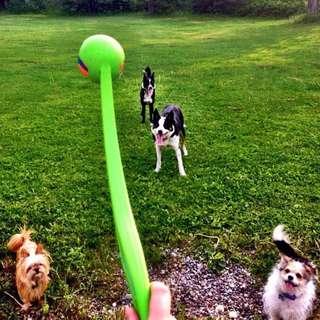 Dog ball thrower toy fetch